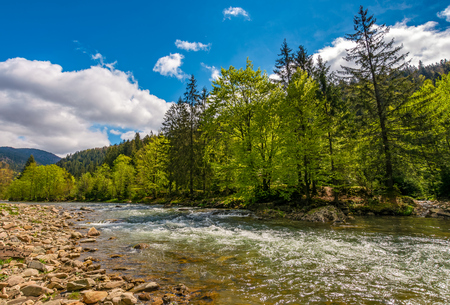 River flows among of a green forest at the foot of the mountain. Picturesque nature area in Carpathians. Serene springtime day under blue sky with some clouds Stock Photo - 80309226
