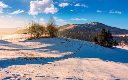 few naked trees on snowy hillside  in winter. foggy morning in Carpathian mountains
