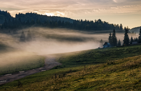 Rural landscape in mountains of Romania. flock of sheep on the hillside meadow in fog near the forest at sunrise