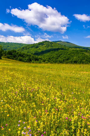 countryside summer landscape in mountains on fine weather day. grassy rural field with wild flowers near the forest on a hillside under blue sky with some clouds