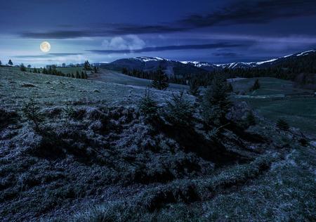 雪のピークとカルパティア山の尾根。春シーズンのトウヒ林と芝生の高山草原。青い空、雲が満月の光で夜の天気