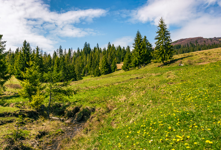 small wild stream among the forest on grassy hillside. beautifull landscape in sunny weather