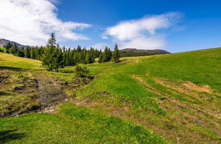 草で覆われた丘の中腹に森林の中で小さな野生のストリーム。晴れた日の美しい風景