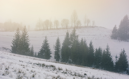 forest on snowy hillside at foggy winter sunrise