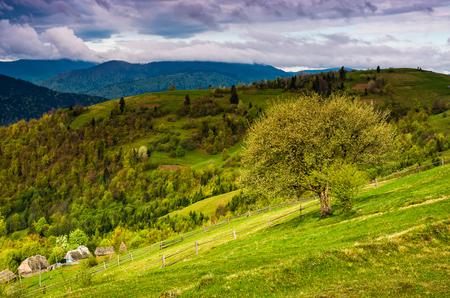 boom en hek op landelijke weide in de bergen. Karpatisch plattelandslandschap in dramatisch weer