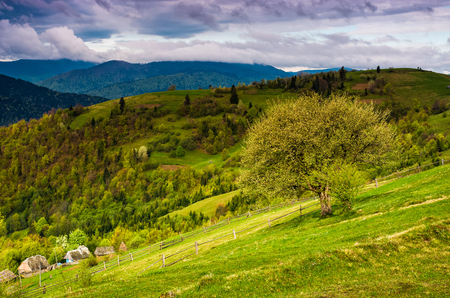 tree and fence on rural meadow in mountains. Carpathian countryside landscape in dramatic weather