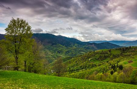 boom en hek op landelijke weide in bergen. Karpaten platteland landschap in dramatisch weer