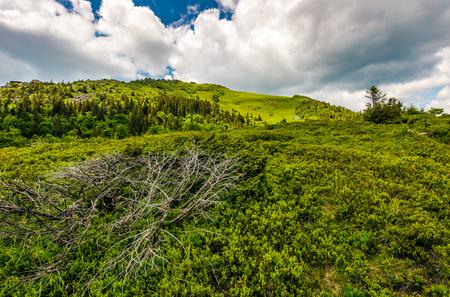 summer mountain landscape. grassy meadow on the top of hillside in Carpathians.