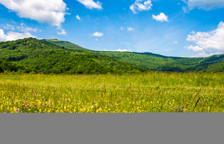 field with wild herbs in summer. mountain landscape in fine weather with blue sky and puffy clouds Banco de Imagens