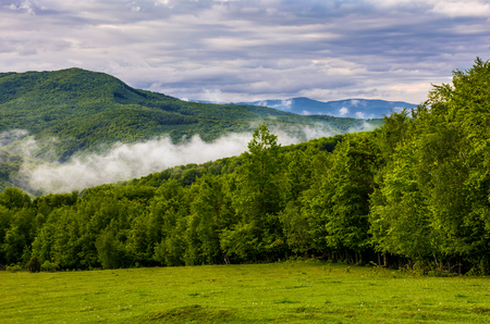 forest on grassy hillside. gorgeous cloudy sunrise in mountains