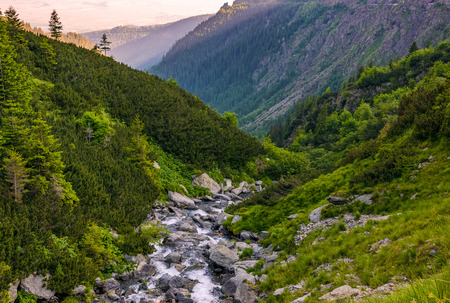 rapid stream in mountains at sunrise. rocky shore among green forest. beautiful carpathian landscape Stock Photo