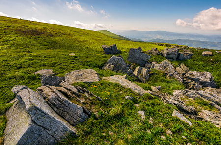 Dandelions among the rocks. Dramatic summer landscape in Carpathian Alps.