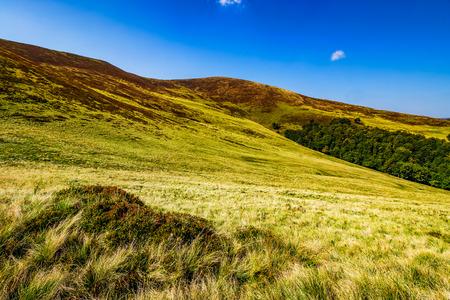 met gras begroeide heuvels op de late zomerdag. eenvoudige landschapsachtergrond Stockfoto
