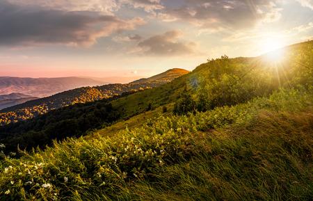 豪華な赤い夕日の丘の上の芝生の草原。美しい夏の風景