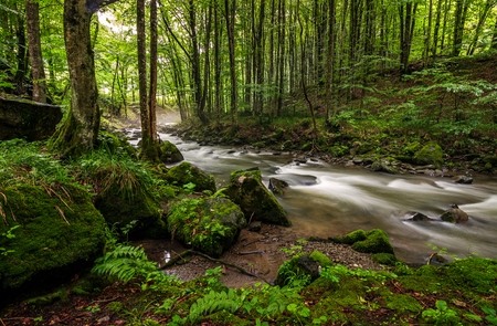 Rapid stream flow through ancient green forest. stones covered with moss lay on the shore. beautiful nature view in summer time. Stock Photo - 82614337