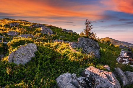 epic landscape of Carpathian high mountain ridge. lonely spruce tree among huge rocks on grassy hillside. gorgeous vewpoint with hills and peaks in the distance. spectacular scenery with blue sky and clouds in summer time Stock Photo