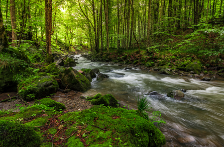 Rapid stream flow through ancient green forest. stones covered with moss lay on the shore. beautiful nature view in summer time. Stock Photo - 82687584