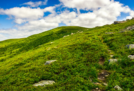 summer mountain landscape. footpath uphill through the ridge to the peak. beautiful nature scene in summer