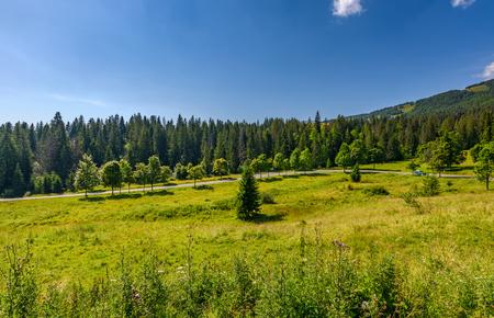 언덕 medow 숲 근처를 통해도. 여름에 아름 다운 산 풍경