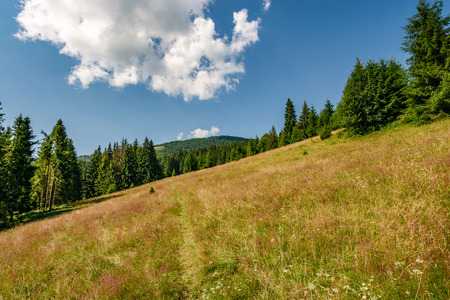 Classic Carpathian landscape. Conifer forest on hillside meadow of mountain ridge. Fresh and green trees under blue sky with clouds Stock Photo