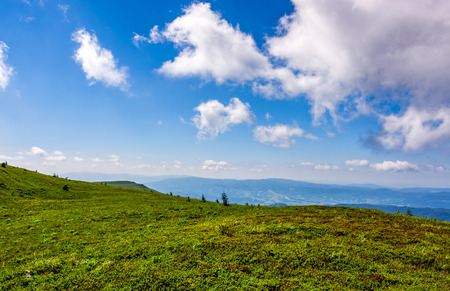 beautiful summer landscape. green grassy meadow on a hillside on top of mountain ridge under cloudy blue sky