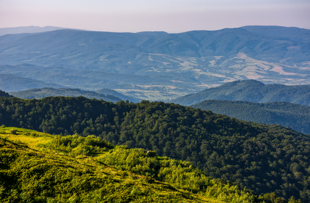 slope of mountain range with forest and on hillside. beautiful summer scenery