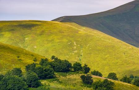 lovely mountain landscape. green meadow near the forest on the hillside in Carpathians