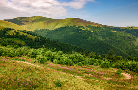 landscape with grassy meadow with purple flowers by the road on the slope of a hill. Carpathian mountain ridge Borzhava on a beautiful sunny summer day Stock Photo - 83153544