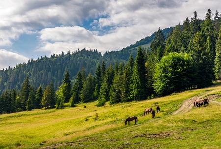 Paarden grazen in de buurt van de weg in een clearing aan de rand van het bos Stockfoto