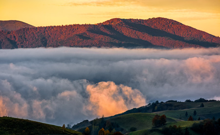 when: cold morning fog with golden hot sunrise in the valley of Carpathian mountain range. green grass and trees with colorful foliage on the hillside meadow lit by first rays of sun Stock Photo