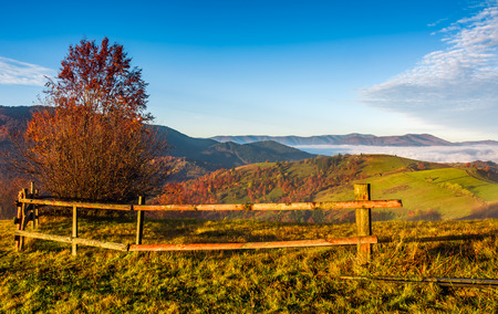 countryside area at foggy morning in autumn. lovely landscape with yellow trees and fence in mountains at sunrise