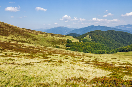 grassy hillsides on mountain ridge. fine autumn weather in mountains