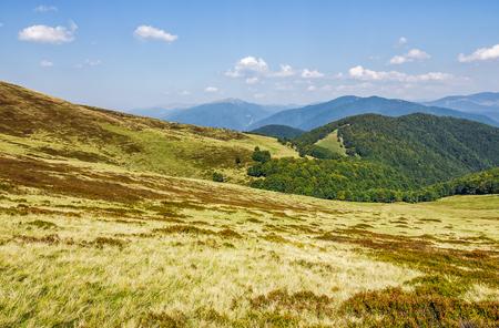 met gras begroeide heuvels op de bergrug. fijn herfstweer in de bergen
