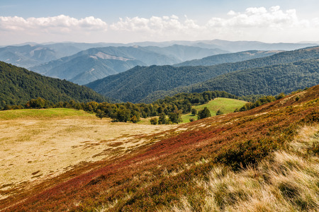 reddish weathered grassy carpet of hillside. beautiful scenery in mountains at the begining of autumn
