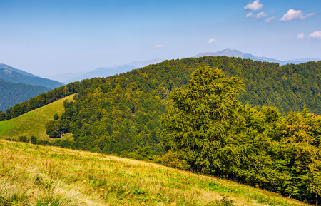 forest on hills of mountain ridge. lovely autumn scene. beautiful travel background
