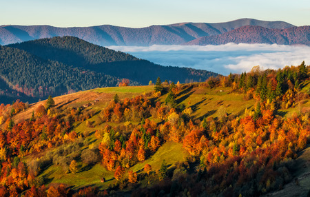 Foggy valley behind the hill at autumn sunrise. colorful foliage on trees in morning light
