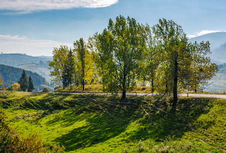 range of poplar trees by the road on hillside. beautiful day in mountainous countryside