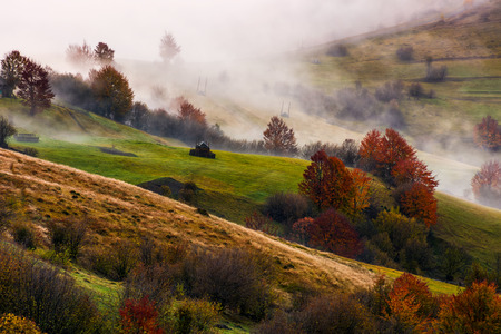 thick fog on hilly rural fields in autumn. overwhelming countryside weather at sunrise