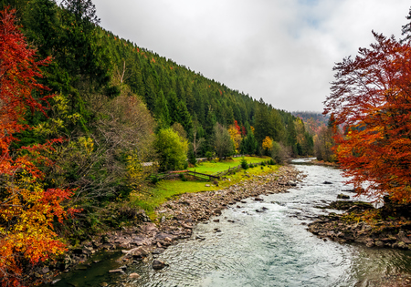 picturesque autumn scenery with forest river in mountains. overwhelming colors of foliage on overcast day in countryside