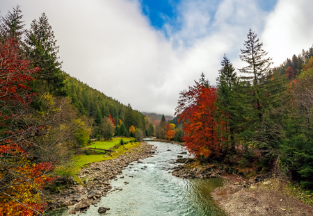 Gorgeous autumn countryside landscape. river with rocky shore among forest with colorful foliage under the cloudy sky