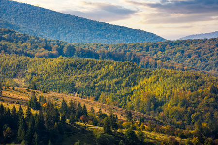 Hills of mountain range with forest in autumn. beautiful colors and texture at sunrise