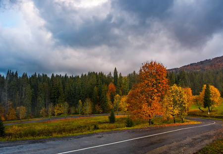Colorful foliage on serpentine in rainy fall weather. dramatic scene in mountains Stock Photo