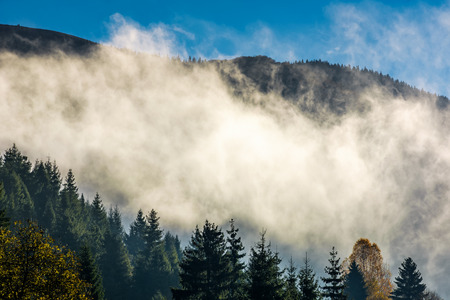 cloud rising up from the forest in autumn morning. gorgeous nature weather background