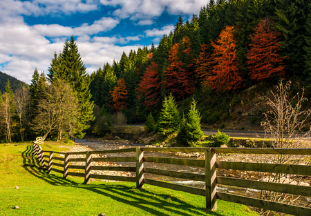 wooden fence near forest river in autumn mountains. few red foliage trees among spruce forest on hill
