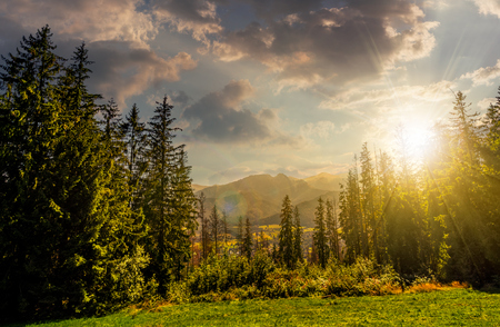 Spruce forest on a meadow in High Tatras mountain ridge. Beautiful sunny day in Poland Countryside