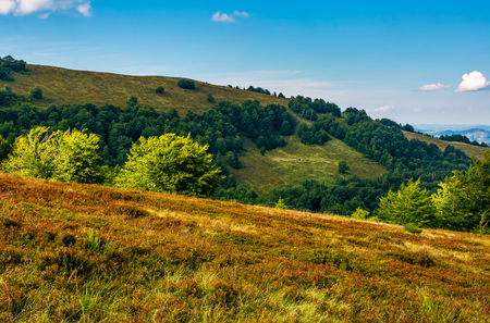 forest on a hillside in evening light. Beautiful late evening in august Stok Fotoğraf
