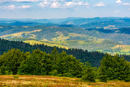 forest on a hillside of Carpathian Mountain Ridge. Beautiful in to the rural valley in late august evening