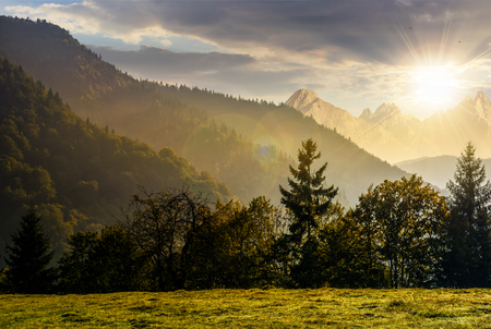 Spruce forest on the hillside meadow in High Tatras mountain ridge. Gorgeous scenery mountainous scenery in early autumn at sunset Stock Photo