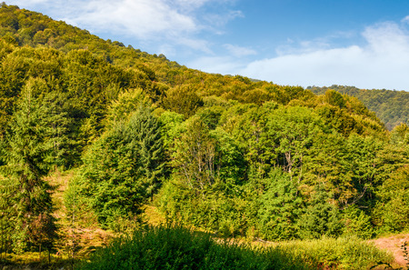 Forest on the hillside on Carpathian mountai. Beautiful mountainous scenery in early autumn morning