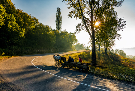 Volovets, Ukraine - SEP 30, 2016: horse cart moving on serpentine in countryside area. bright autumnal sunrise in Carpathian mountains Banco de Imagens